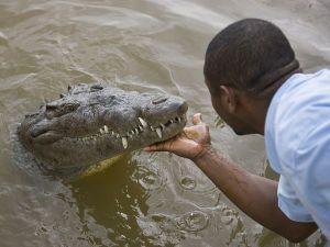jamaica-croc_2258