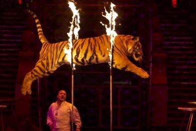 circus-tiger-fire